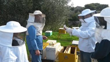 μελισσοκομία-για-ρχάριους5